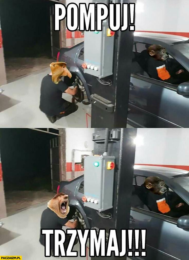 Pompuj trzymaj typowy Polak nosacz małpa samochód hamulce