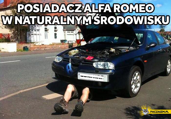 Posiadacz Alfa Romeo w naturalnym środowisku