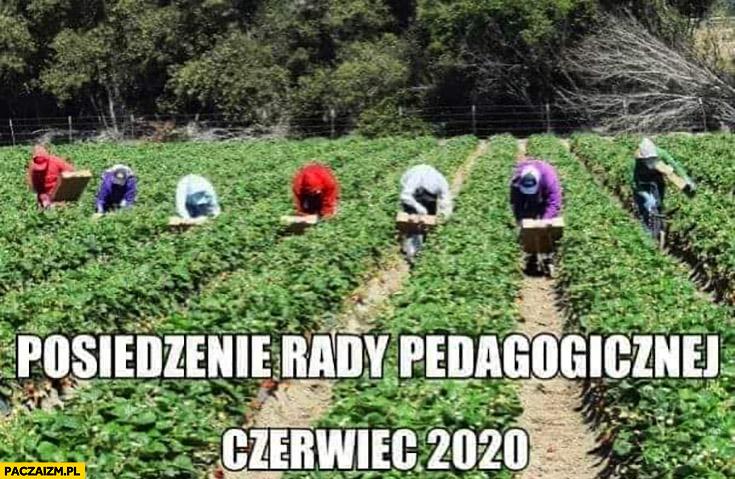 Posiedzenie rady pedagogicznej czerwiec 2020 pole zbierają truskawki
