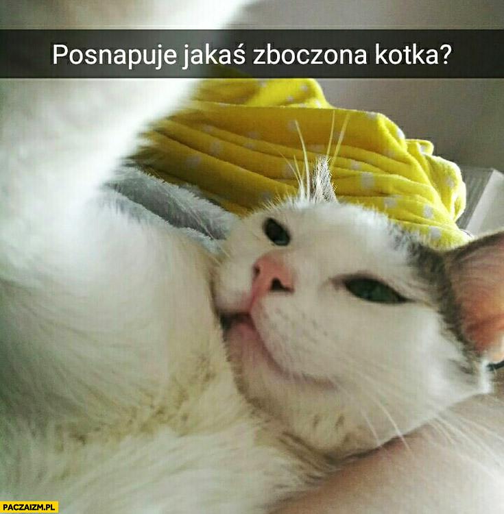 Posnapuje jakaś zboczona kotka? Kot selfie snapchat
