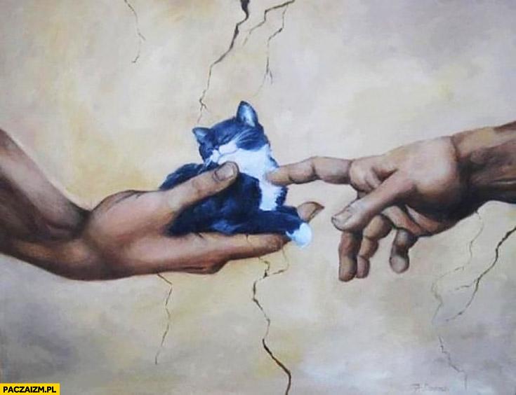 Powstanie kota kitku mizia palcem