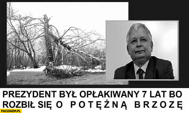 Prezydent był opłakiwany 7 lat bo rozbił się o potężną brzozę Lech Kaczyński