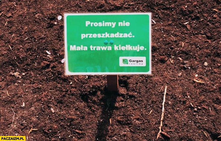 Prosimy nie przeszkadzać mała trawa kiełkuje