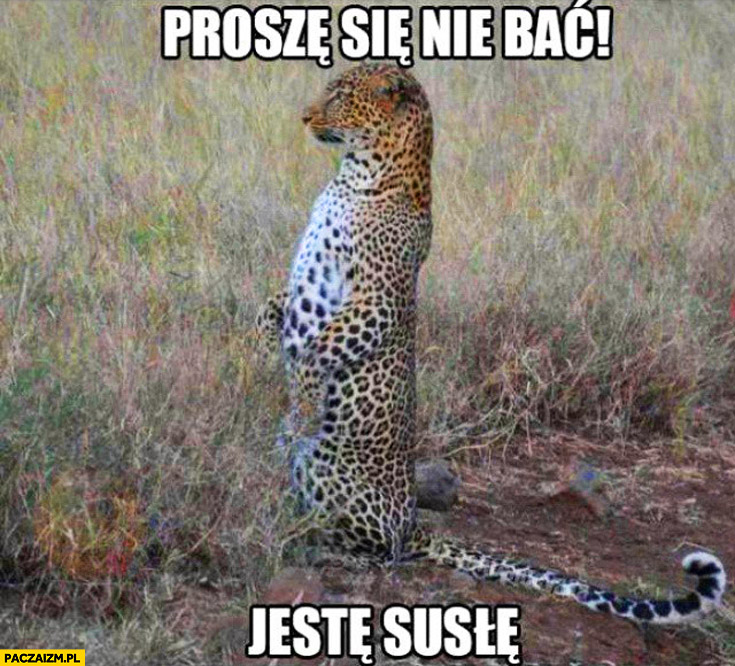 Proszę się nie bać jestem susłem gepard