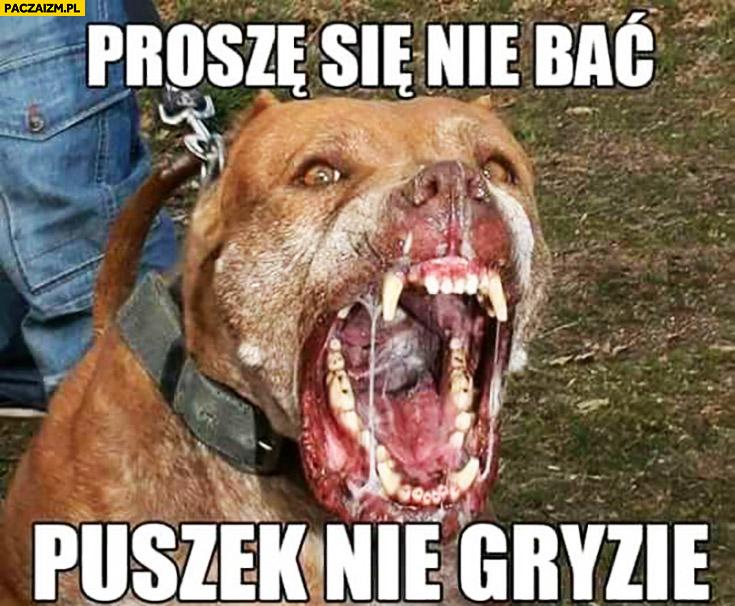 Proszę się nie bać puszek nie gryzie wściekły agresywny pies