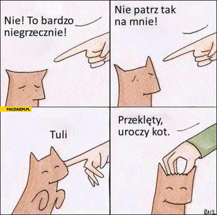 Przeklęty uroczy kot