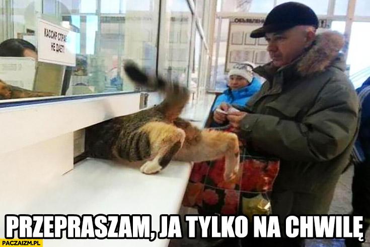 Przepraszam ja tylko na chwilę kot w kolejce wciska się do okienka