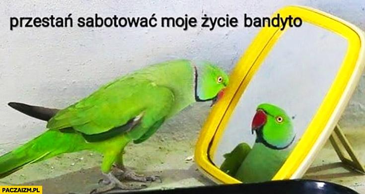 Przestań sabotować moje życie bandyto papuga do swojego odbicia siebie w lustrze