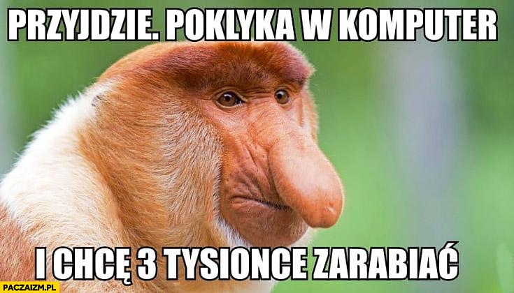 Przyjdzie poklika w komputer i chce 3 tysiące zarabiać typowy Polak nosacz małpa