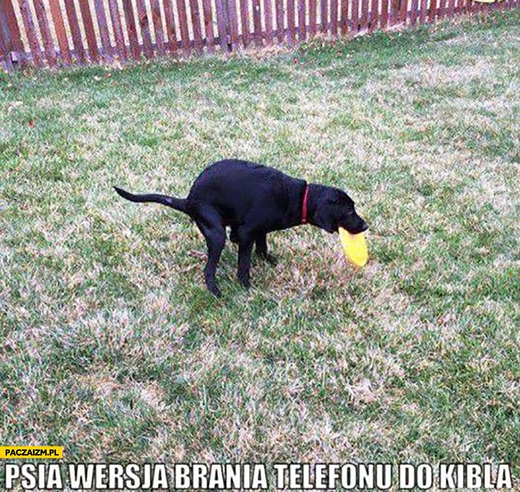 Psia wersja brania telefonu do kibla aportuje frisbee robi kupę jednocześnie