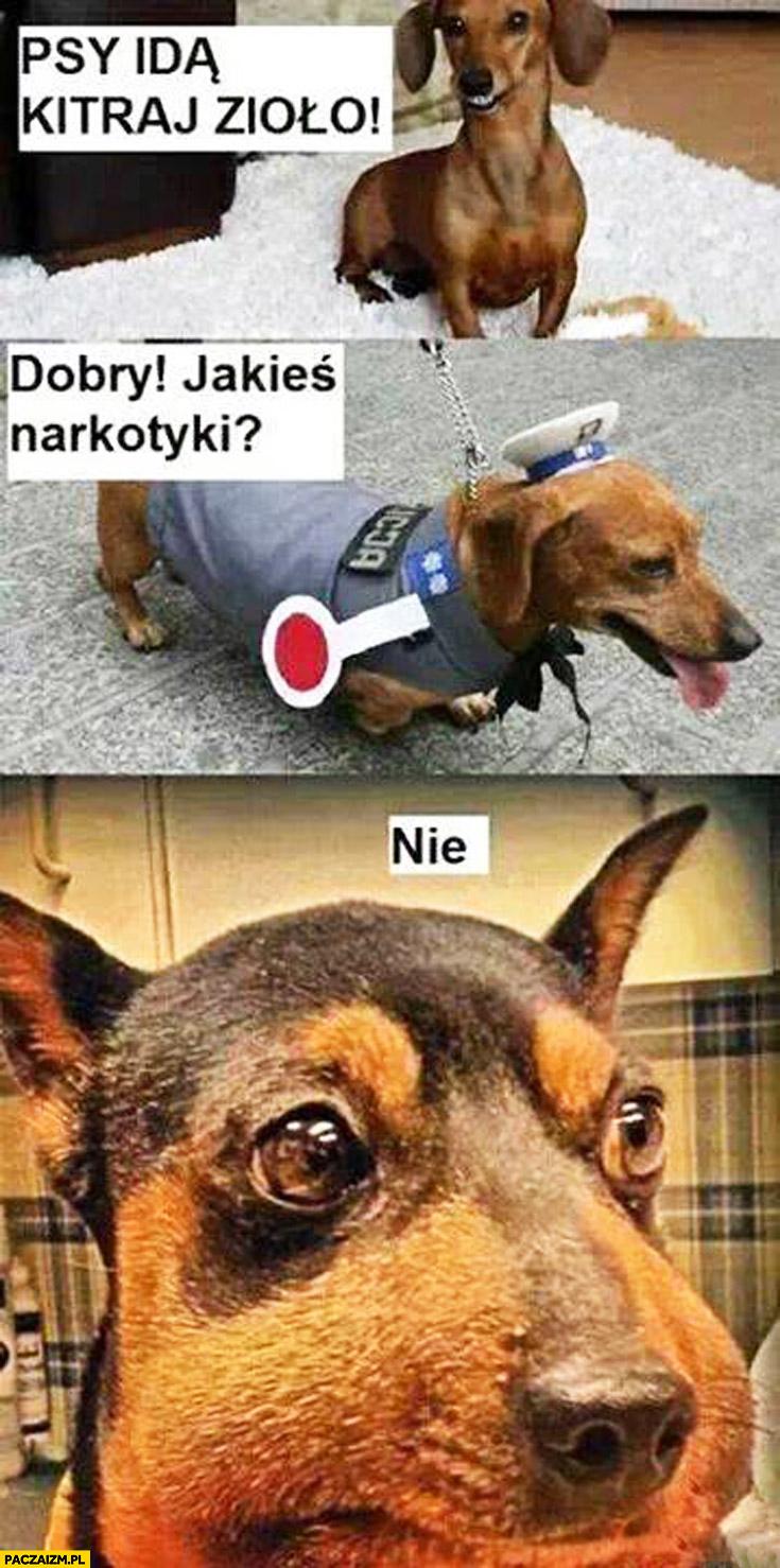 Psy idą kitraj zioło dzień dobry jakieś narkotyki? nie