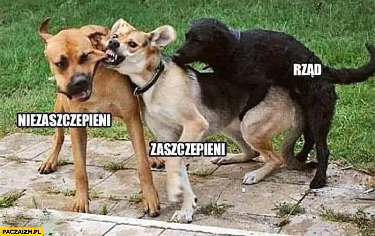 Psy niezaszczepieni zaszczepieni rząd