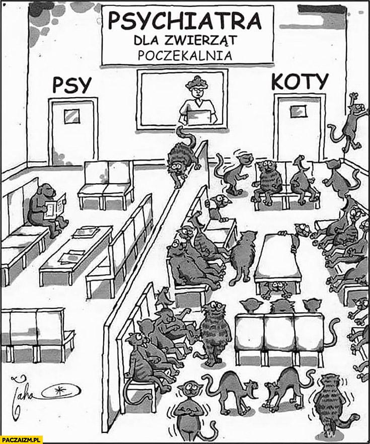 Psychiatra dla zwierząt poczekalnia psy pusto koty pełna kolejka