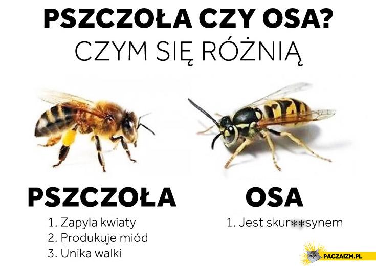 Pszczoła czy osa? Czym się różnię jest skurczysynem