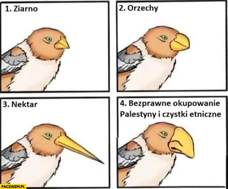 Ptak dziób ziarno orzechy nektar Żyd bezprawne okupowanie Palestyny i czystki etniczne
