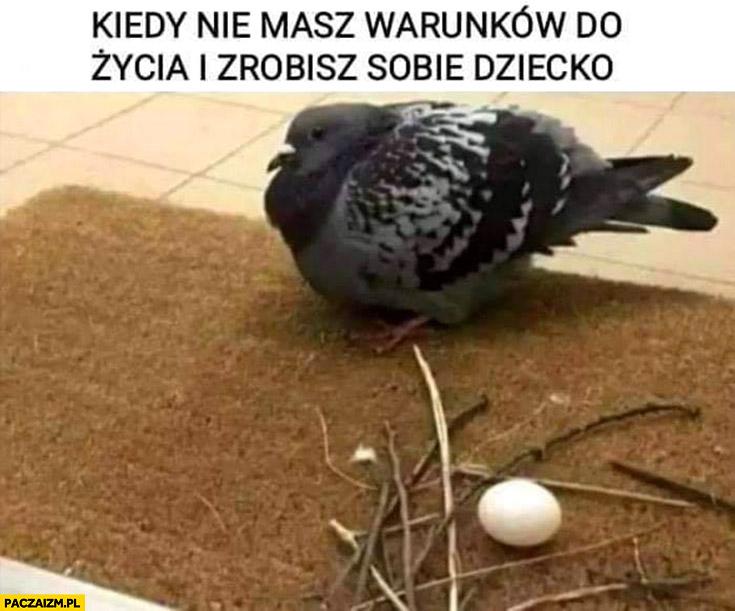 Ptak gołąb kiedy nie masz warunków do życia i zrobisz sobie dziecko