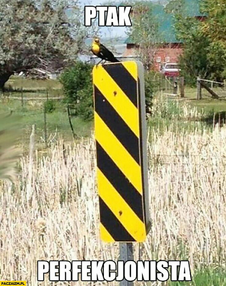 Ptak perfekcjonista na żółto-czarnym znaku