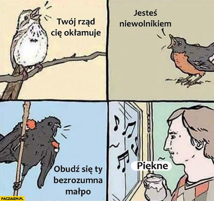 Ptak ptaki twój rząd Cię okłamuje, jesteś niewolnikiem, obudź się Ty bezrozumna małpo człowiek piękne