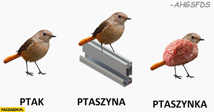 Ptak ptaszyna ptaszynka szyna szynka