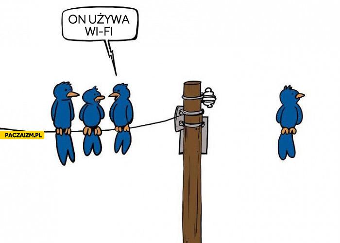 Ptak używa wifi