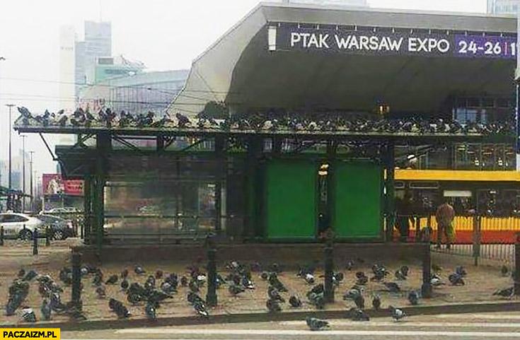 Ptak Warsaw Expo gołębie przyleciały na targi