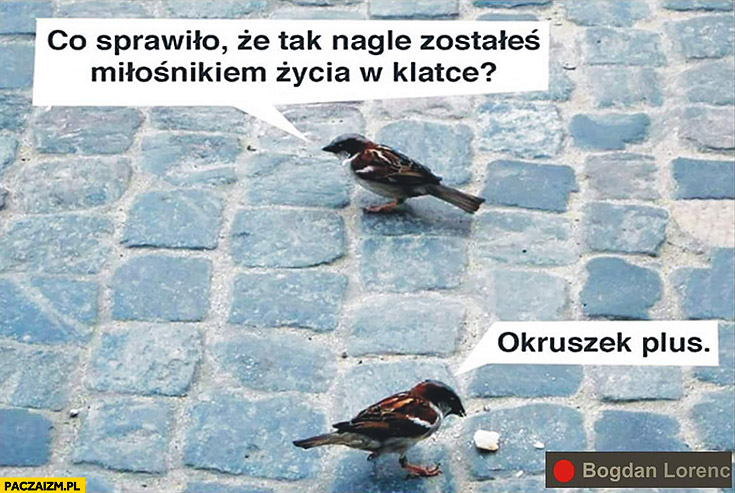 Ptaki rozmawiają: co sprawiło, że nagle zostałeś miłośnikiem życia w klatce? Okruszek plus
