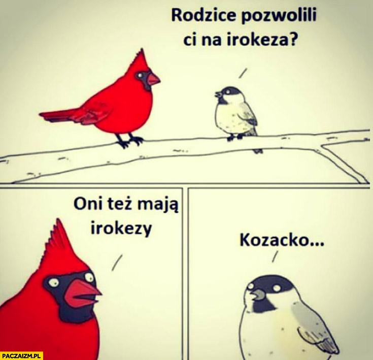 Ptaki rozmawiają: rodzice pozwolili Ci na irokeza? Oni też mają irokezy, kozacko