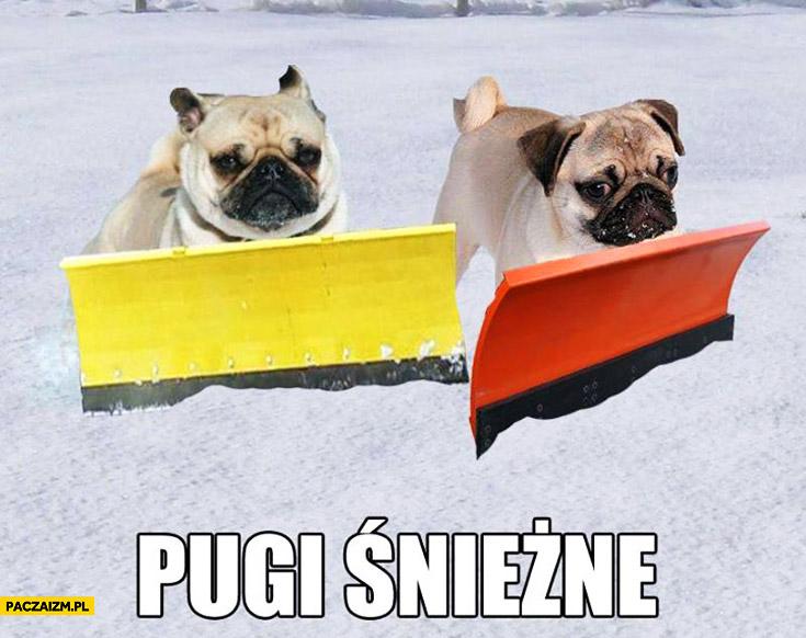 Pugi śnieżne psy