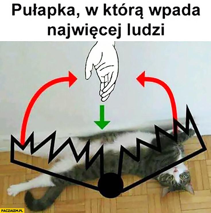Pułapka, w którą wpada najwięcej ludzi głaskanie kota po brzuchu kleszcze