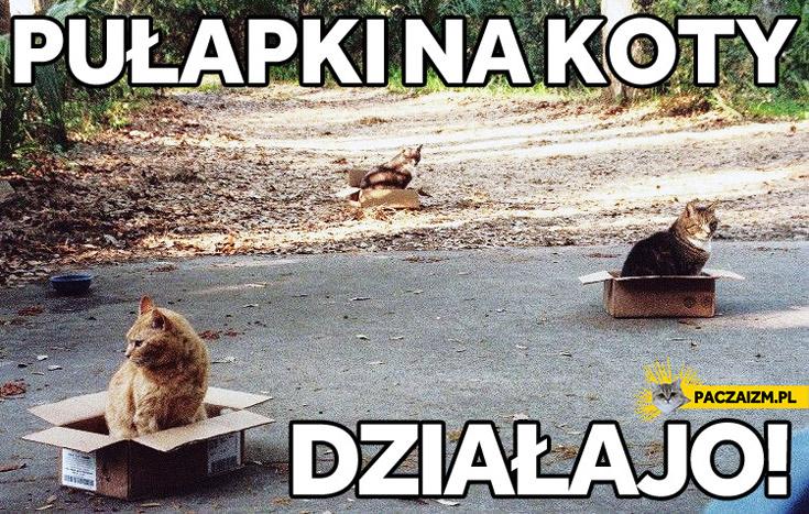 Pułapki na koty działajo bez zarzutu!