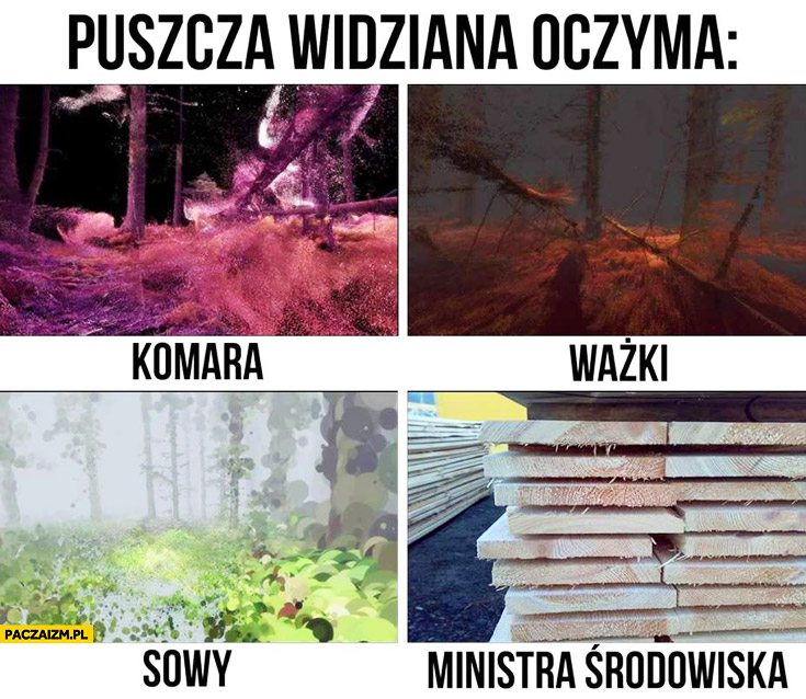 Puszcza widziana oczyma komara, ważki, sowy, ministra środowiska ścięte drewno Szyszko fail