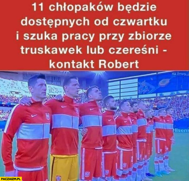 Reprezentacja polski 11 chłopaków szuka pracy przy zbiorze truskawek lub czereśni kontakt Robert