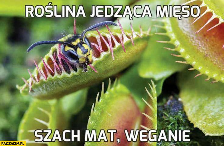 Roślina jedząca mięso szach mat weganie