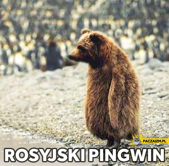 Rosyjski pingwin