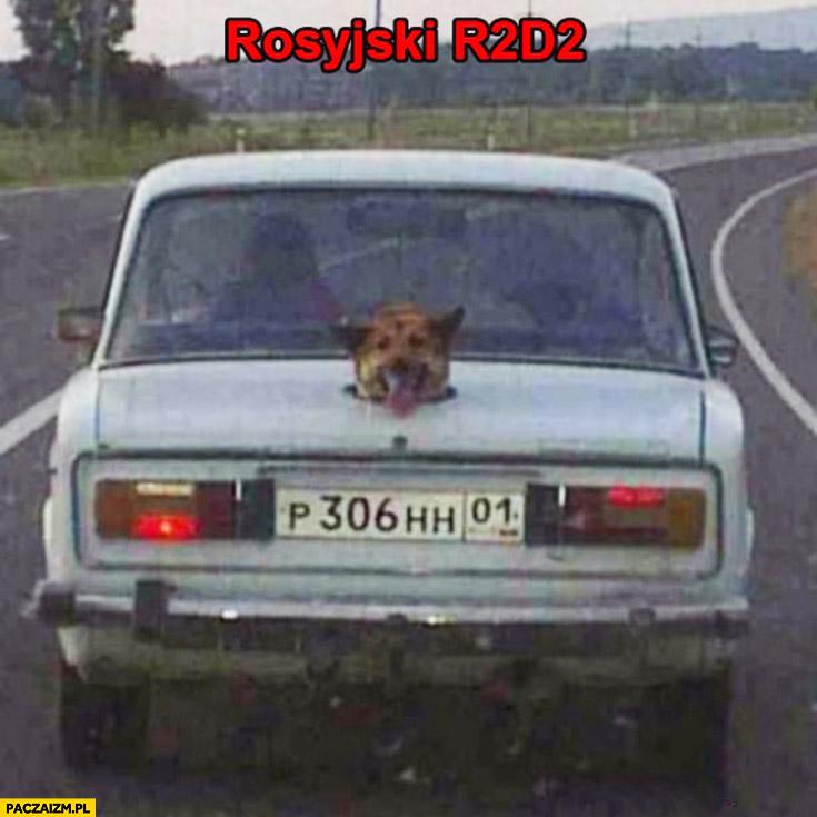 Rosyjski R2D2 pies głowa wystająca z bagażnika