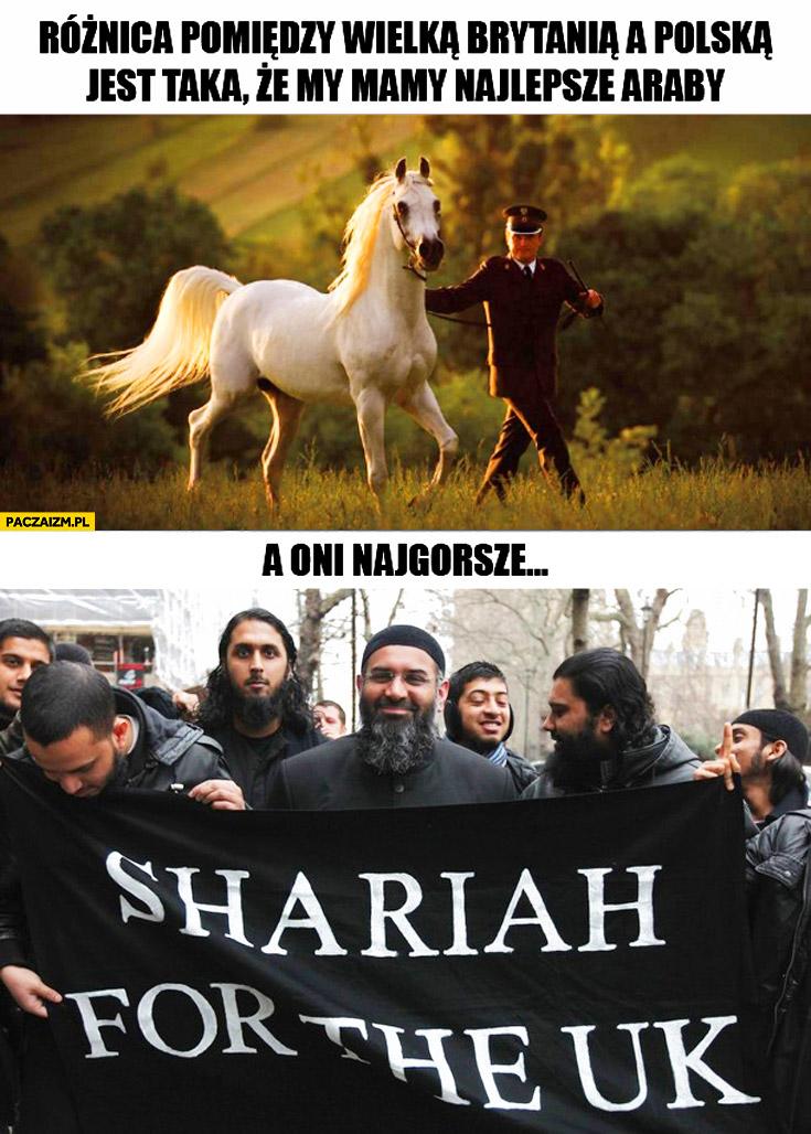 Różnica między Wielką Brytanią a Polską mamy najlepsze Araby konie a oni najgorsze Muzułmanów