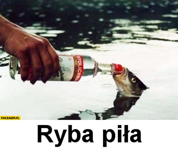 Ryba piła wódka