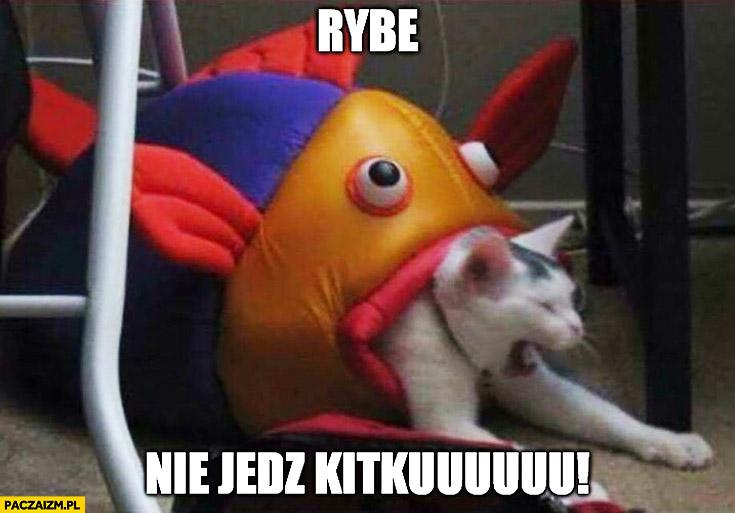 Rybe nie jedz kitku ryba zabawka zjada kota