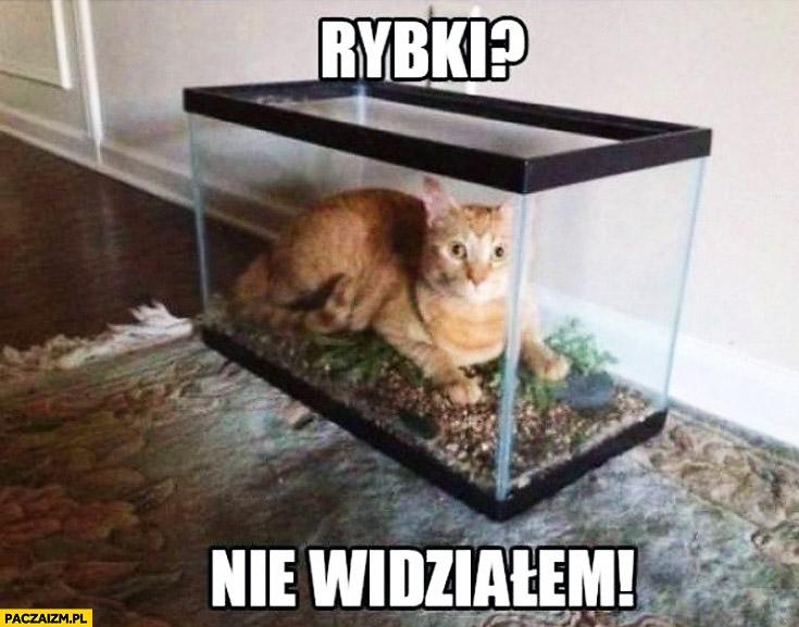 Rybki? Nie widziałem kot w akwarium