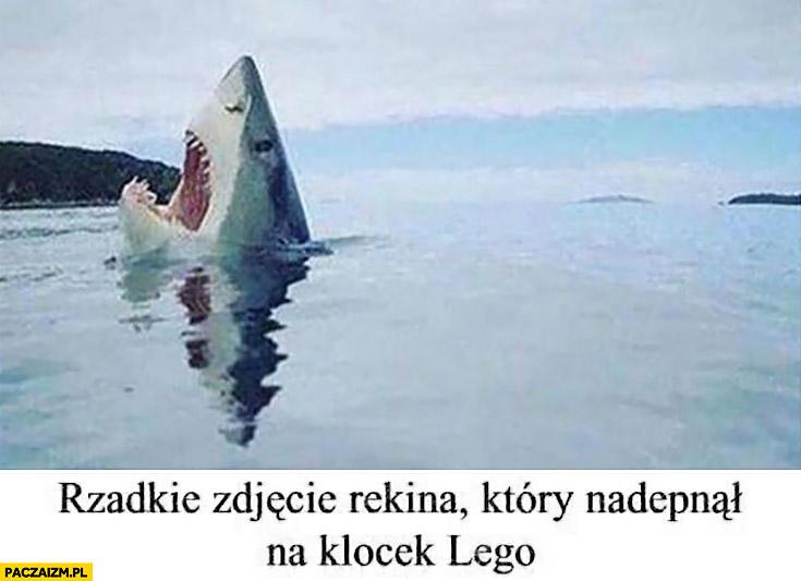 Rzadkie zdjęcie rekina, który nadepnął na klocek LEGO