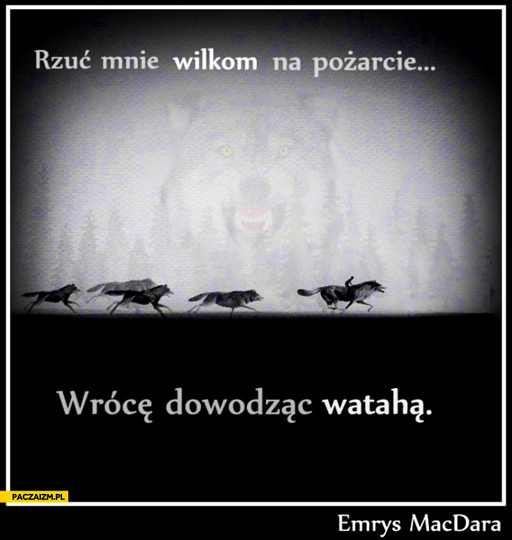 Rzuć mnie wilkom na pożarcie wrócę dowodząc watahą Emrys Macdara
