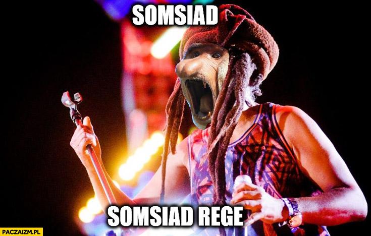 Sąsiad somsiad reggae typowy Polak nosacz małpa