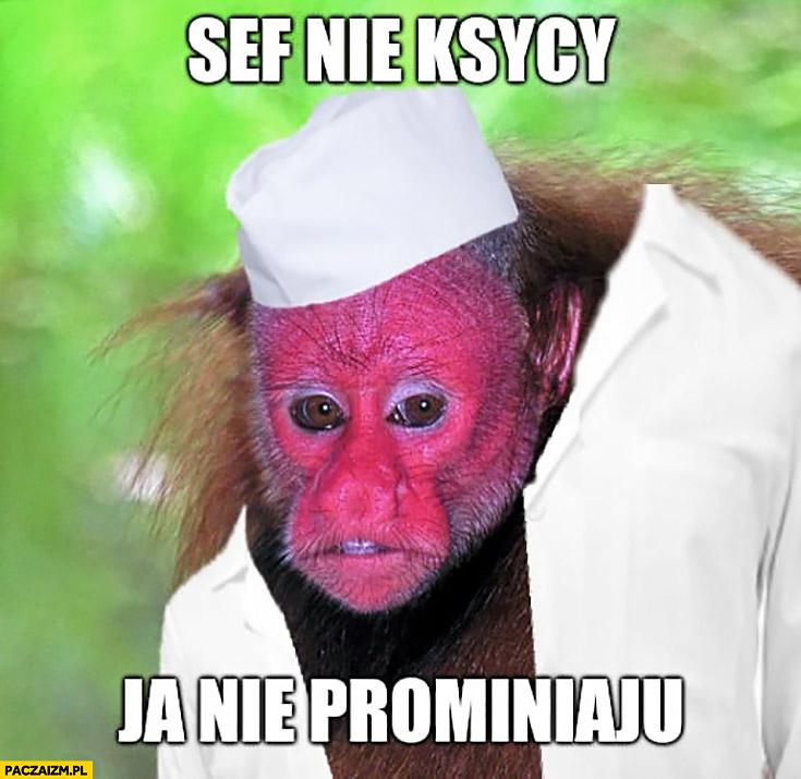 Sef nie ksycy ja nie prominiaju małpa Ukrainiec Czernobyl