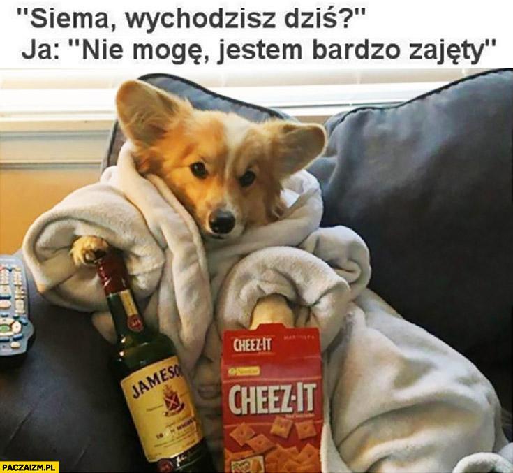 Siema wychodzisz dziś? Ja: nie mogę, jestem bardzo zajęty pies w szlafroku z piwem i chipsami