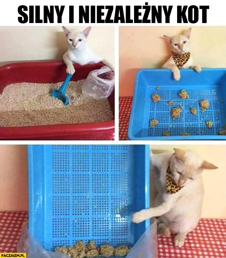 Silny i niezależny kot sam sprząta po sobie kuwetę