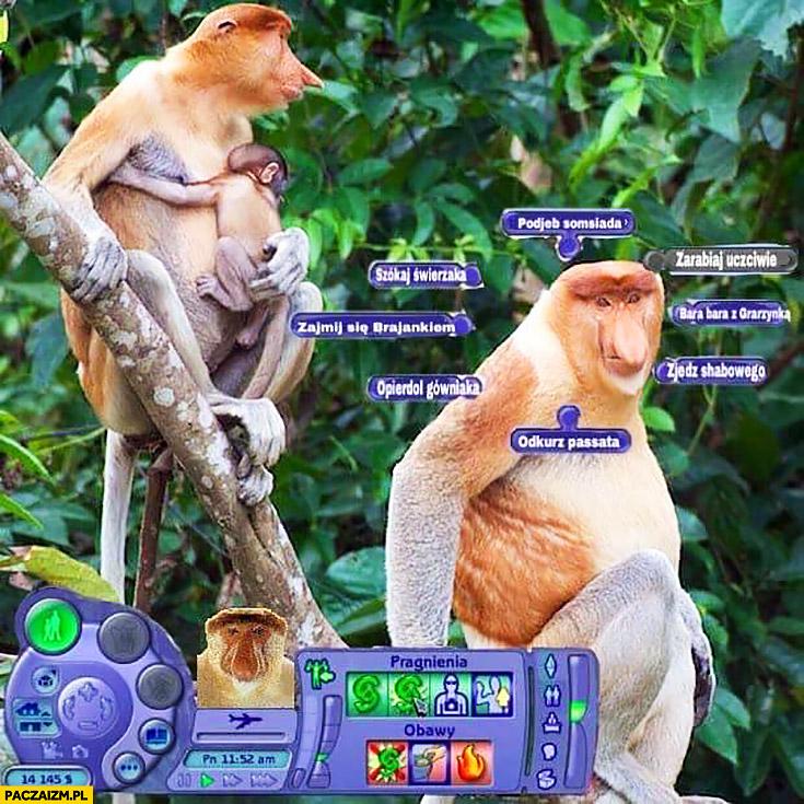 Simsy: odkurz Passata, zjedz schabowego, zajmij się Brajankiem typowy Polak nosacz małpa The Sims