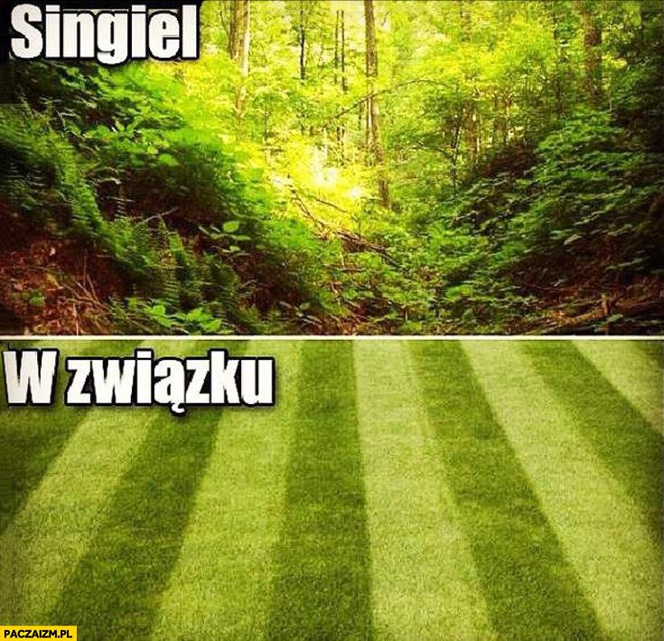 Singiel: dżungla puszcza, w związku: równo przystrzyżony trawnik
