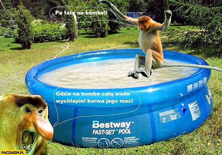 Skaczę do basenu patrz tata na bombę, całą wodę wychlapie typowy Polak nosacz małpa