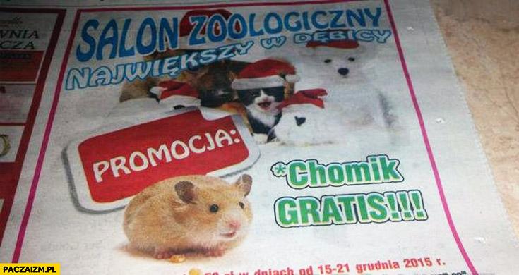Sklep zoologiczny promocja chomik gratis