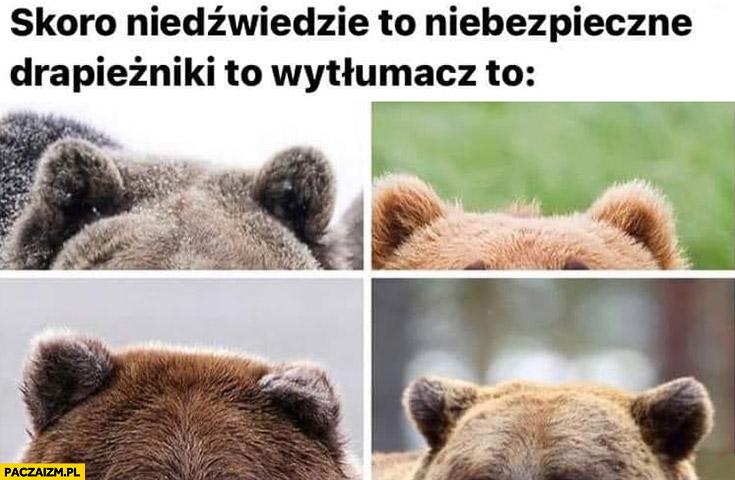 Skoro niedźwiedzie to niebezpieczne drapieżniki to wytłumacz to słodkie uszy uszka